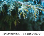 Small photo of On pins and needles hanging frozen droplets of ice after ice rain. Shallow depth of field, abstract background with place for text.