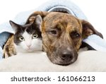 Stock photo sad dog and cat lying on a pillow under a blanket isolated on white background 161066213