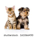 Stock photo little kitten and puppy together isolated on white background 161066450