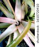 nature green florest plant... | Shutterstock . vector #1610720410