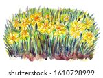 Daffodils  Abstract Floral...