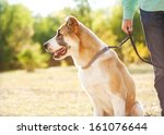 Stock photo man and central asian shepherd walk in the park he keeps the dog on the leash 161076644