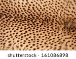 Close Up View Of The Skin Of A...
