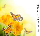 Yellow Flowers And Butterfly  A ...