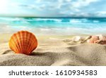Sea Shell In The Sand