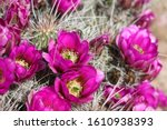 Clsoeup Of Bright Pink Flowers...