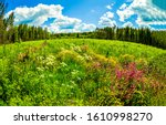 Summer Forest Meadow Flowers...