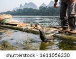 A Fisherman Trains His...