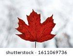 Red Autumn Leaf On Blue Sky...