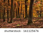 the old oak forest in falls... | Shutterstock . vector #161125676