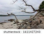 Rocky Beach View With Tree