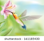 hummingbird bird flies inside... | Shutterstock .eps vector #161185430