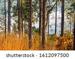 Mixed Deciduous Forest And...