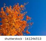 Bright Colorful Orange Fall...