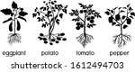 silhouettes of different... | Shutterstock .eps vector #1612494703