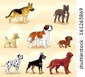 set of dogs. vector illustration | Shutterstock .eps vector #161265869