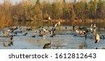 Group Of Ducks Landing On...