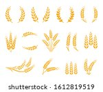 wheat and oat grain spikes and... | Shutterstock . vector #1612819519