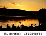 Silhouettes of ducks on the shore of lake Kuchajda at sunset - Kuchajda, Bratislava, Slovakia, Europe