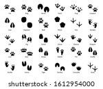 animal footprints. walking... | Shutterstock .eps vector #1612954000