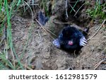 Mole Crawling Out Of Molehill...