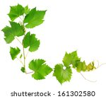 Vine Leaves Isolated On White...