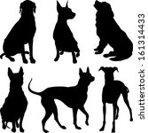 Stock photo set of silhouettes of dogs pinscher ridgeback hound pointer newfoundland dalmatians breed in 161314433