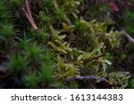 moss clump close up shot