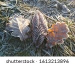 Tytu   Frost On Leaves In Cold...