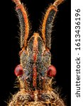 Extreme Macro   Dorsal View Of...