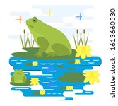 Vector Illustration With Frogs...