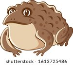 brown toad on white background...   Shutterstock .eps vector #1613725486