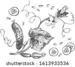 vector illustration of cucumber ... | Shutterstock .eps vector #1613933536