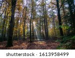 Colorful Trees In A Dutch Forest