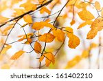 Yellow and orange autumn leaves on a stem with shallow focus background - stock photo