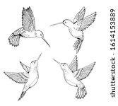 Set Hummingbirds. Sketch Pencil....