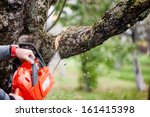 Man Cutting Trees Using An...