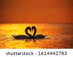 Heart Shape Of White Swans In...