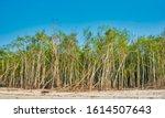 Sundari Mangrove Trees ...
