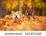 two dogs lying in leaves  | Shutterstock . vector #161451260
