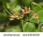 Mangrove Forests Where Cranes...