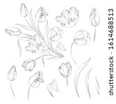 hand drawn tulips collection in ... | Shutterstock .eps vector #1614688513