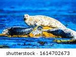 Seal family rest in water