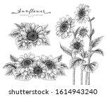 Black And White Sunflower...