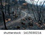 Australian Bushfire Aftermath ...