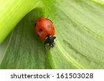 Close Up Of A Ladybug On A...