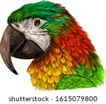 Head Parrot Macaw Yellow Red...
