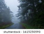 Foggy Landscape Of A Road In A...