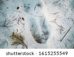 Imprint Of An Elk Trail On Sno...