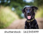 Stock photo black dog 161545499